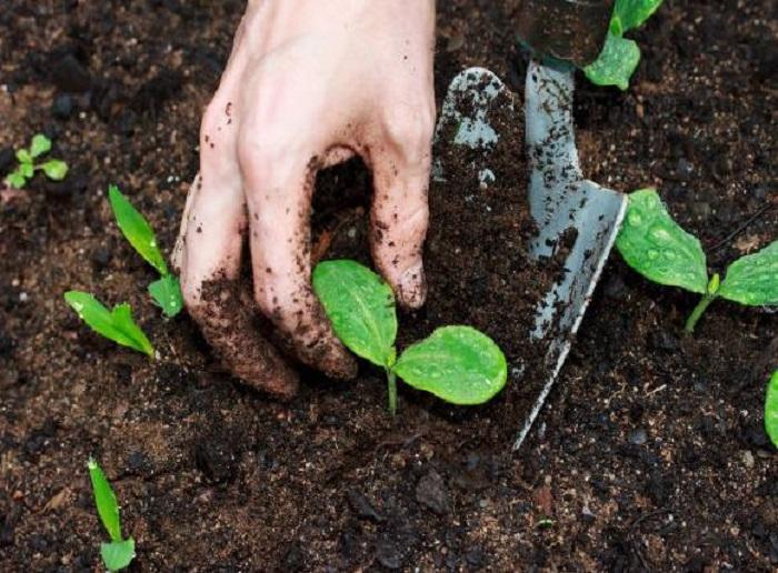 5 Mô hình làm giàu từ nông nghiệp hiệu quả cao
