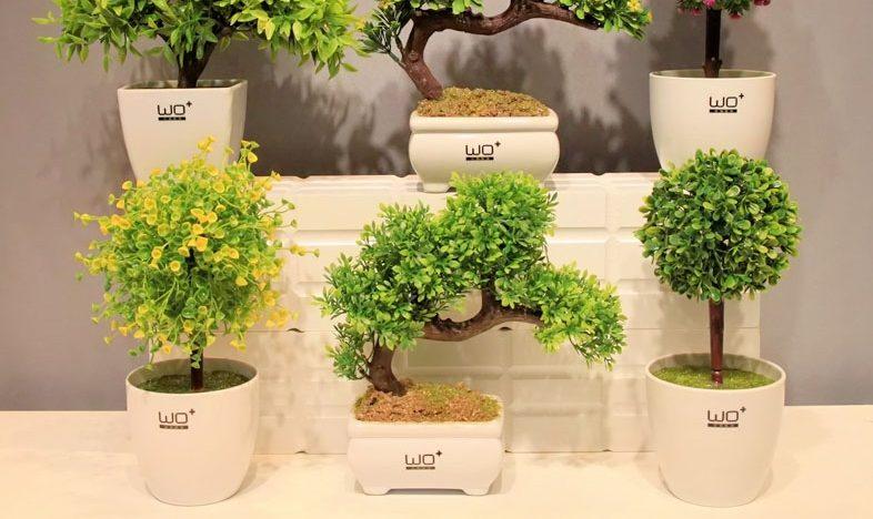 Bình trồng hoa loại nhỏ lên ngôi trong kinh doanh