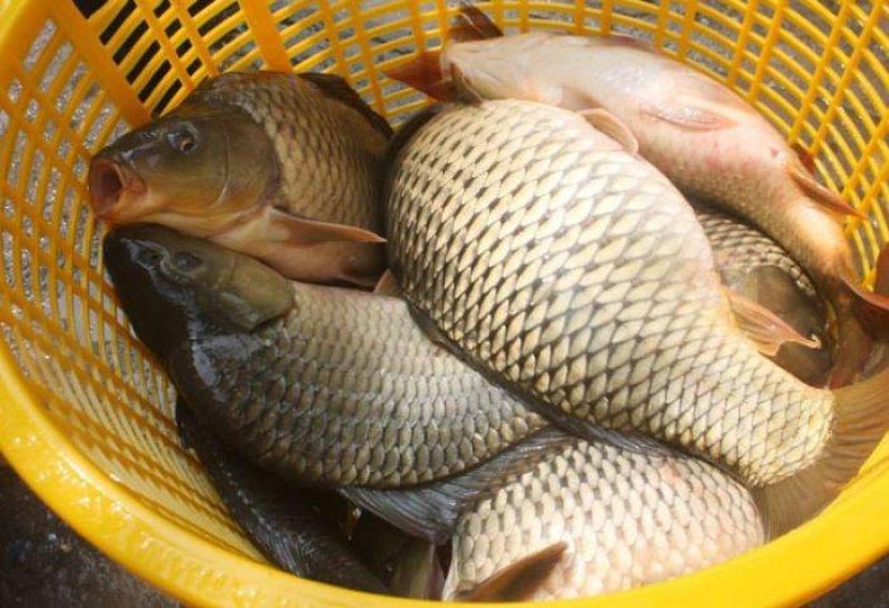 Kinh doanh cá tươi ở chợ thu tiền trăm tiền triệu mỗi ngày