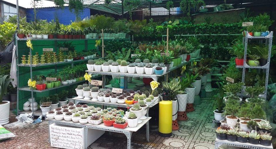 Hướng dẫn kinh doanh cây cảnh mini tại Hà Nội, Sài Gòn