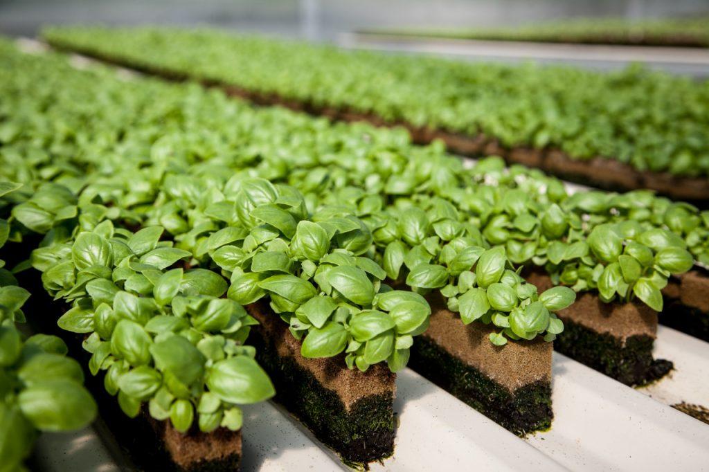 Kế hoạch kinh doanh làm giàu từ nông nghiệp hữu cơ ( P2)