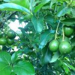 Những cây trồng kinh tế nhất đầu ra ổn định cho lợi nhuận cao tại các vùng nông thôn