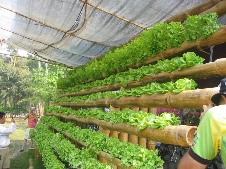15 Ý tưởng kinh doanh tại nông thôn (kinh doanh gì ở nông thôn)