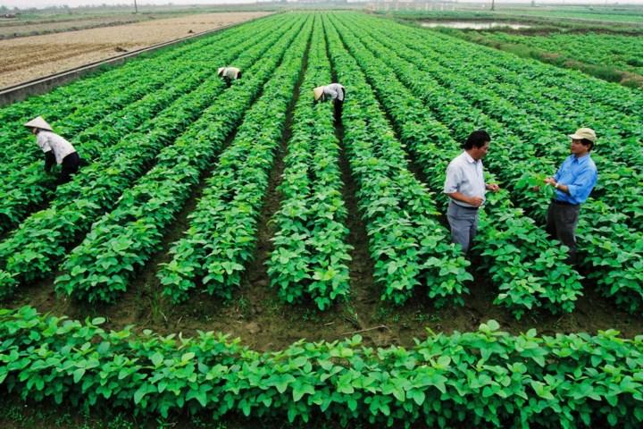 5 Loại cây trồng khởi nghiệp làm giàu tại nông thôn