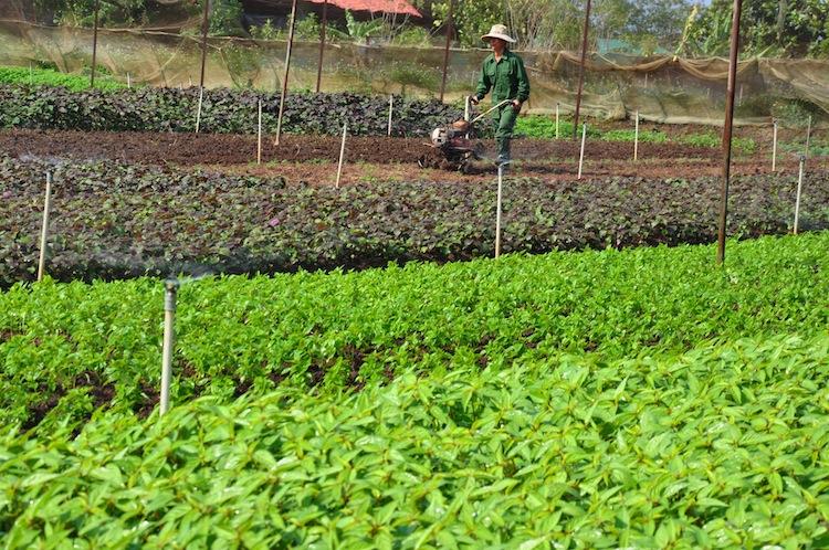 Dịch vụ cho thuê chỗ trồng rau ngồi chơi đếm tiền
