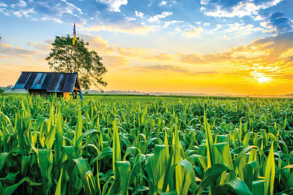 """Làm giàu từ nông nghiệp, 6 điều giúp nhà nông """"cất cánh"""" thành công"""