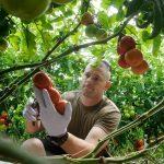 Những cách kiếm tiền ở nông thôn, làm giàu từ nông nghiệp hiệu quả
