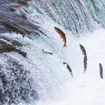 Câu chuyện về ba con cá chạm đến trái tim của rất nhiều người