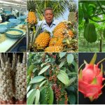 10 mô hình tiếp thị hàng đầu để bán hàng nông sản trên Internet