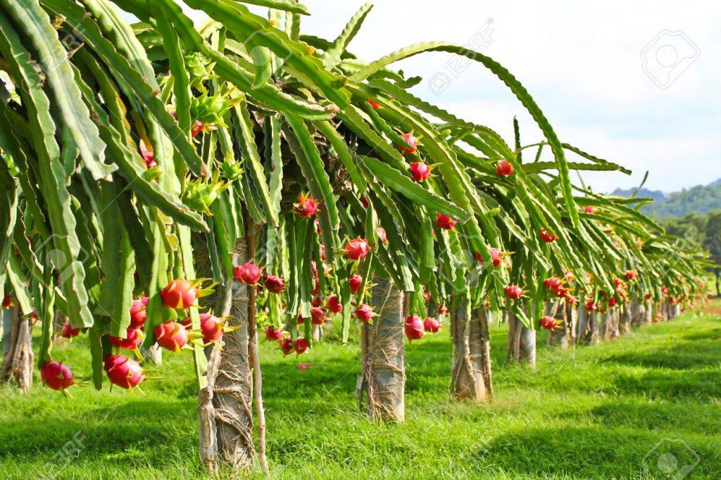 8 Mô hình làm giàu từ nông nghiệp hiệu quả