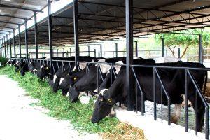 Chăn nuôi gì lợi nhuận cao-nuôi gì dễ kiếm tiền