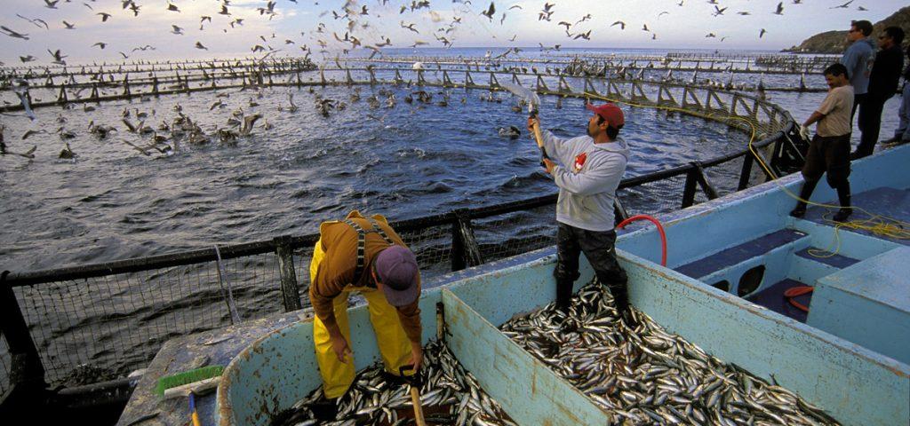 Điều kiện kinh doanh thuốc thú y thủy hải sản