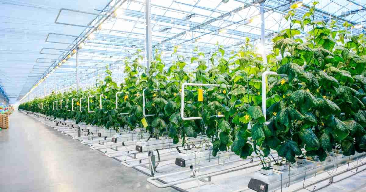 6 Ý tưởng khởi nghiệp trong lĩnh vực nông nghiệp công nghệ cao