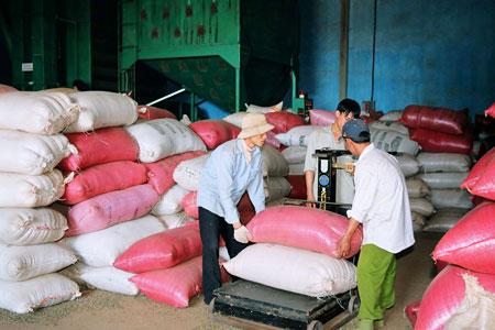 Kế hoạch kinh doanh Nông sản-Làm giàu từ thu mua nông sản