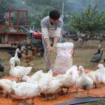 Những bí quyết làm giàu từ chăn nuôi ở nông thôn