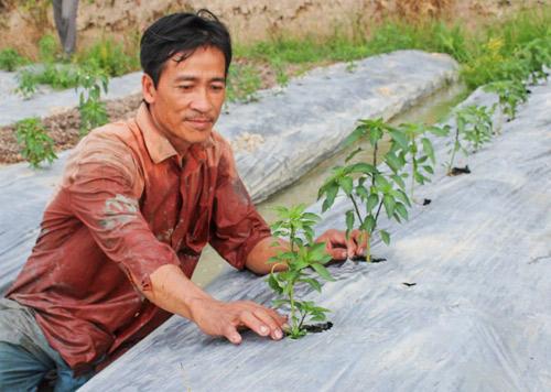 Được hỗ trợ vay vốn, nông dân làm giàu từ cây màu
