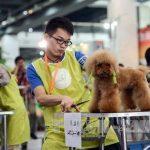 Trung Quốc dành hơn 20 tỷ USD mỗi năm để chăm sóc thú cưng, mảnh đất màu mỡ cho các doanh nghiệp nếu biết nắm bắt thời cơ.