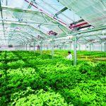 Marketing cho nông dân thời đại 4.0, để đưa nông sản bắt kịp kiểu cách kinh doanh mới