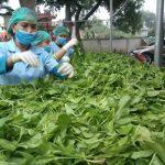 Từ tình yêu cỏ cây đến thành công nhờ làm nông nghiệp sạch