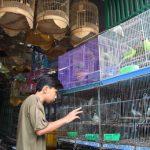 Thợ sửa ô tô thu về hàng trăm triệu đồng mỗi tháng nhờ đam mê nuôi chim bồ câu