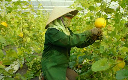 Những chính sách hỗ trợ nông nghiệp công nghệ cao