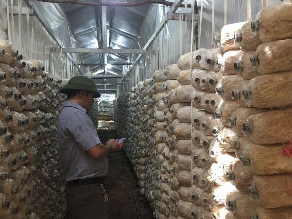Khởi nghiệp với mô hình trồng nấm bào ngư – nông dân kiếm bộn tiền