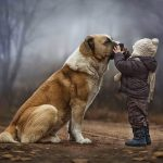 Làm sao để chó quen chủ mới? Cách nuôi chó mới về nhà
