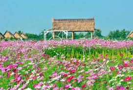 Bảo quản hoa tươi khi vận chuyển xa nhập hàng bán