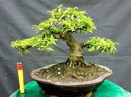 Các loại cây cảnh có giá trị kinh tế cao ở Việt Nam