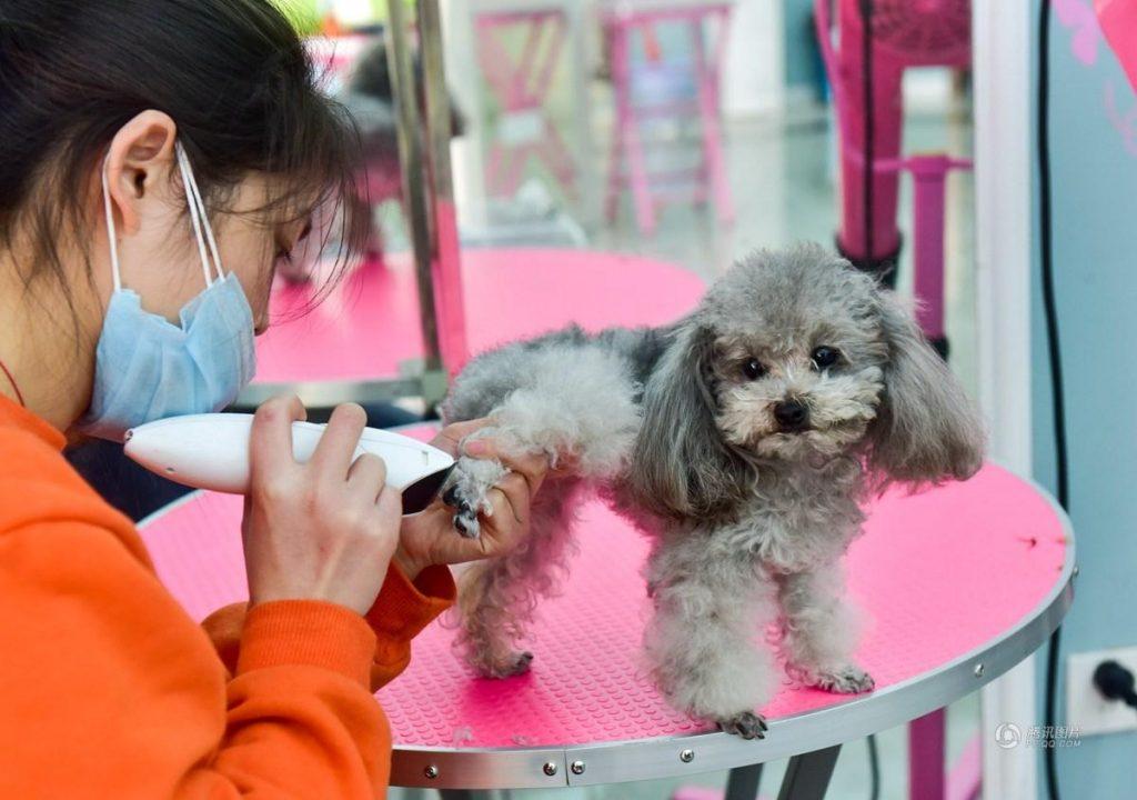 """Bán thú cưng """"vãn thời"""", dịch vụ làm Nghĩa trang cho Chó mèo tăng tốc 70%, nghề hốt bạc cho dân yêu thú cưng"""
