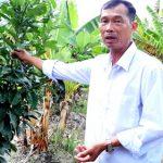 Ý tưởng: Mô hình thu lãi 400 triệu cho người làm giàu từ nông nghiệp
