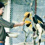 Ý tưởng: Ăn Học đàng hoàng không chọn nghề danh giá, mà bỏ 40 triệu nuôi mấy con Chim, nhân giống trên 10.000 Con