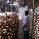Ý tưởng: Thuê 4 người, mỗi năm thu 2 tỷ, Tay ngang mở xưởng với mô hình trồng Nấm
