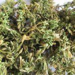Loại Dược liệu dễ trồng, dễ làm ở nhiều nơi, Thu 1.5 triệu mỗi kg ( cách làm Sấy khô lên)