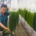 """Mô hình """"Nuôi nước"""" trong 15 ngày, thu riêng tiền lãi 1 tỷ mỗi năm của người đàn ông ở Thái Bình"""
