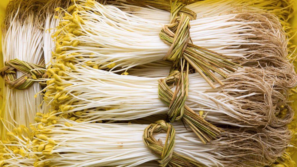Mỗi kg bán thu về 500.000 đồng, Có thể tự làm trong 7 ngày cho thu hoạch