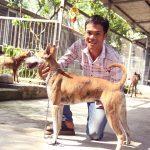 Mua 1 con chó làm quà tặng người thân, nhưng không ngờ trở thành ý tưởng kiếm tiền dựng nên cơ ngơi thu tiền tỷ sau này (Làm giàu từ Chó)