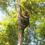 7 ngày kiếm được 24 triệu, Nghề đi cạo nhựa cây trong rừng