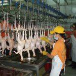 Dữ liệu và cơ hội: thịt gà, mặt hàng kiếm được tiền phổ biến nhất trên thế giới