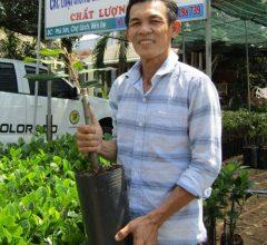 Làm giàu từ nông nghiệp 4.0: Ý tưởng bán cây giống thu 3 tỷ 1 năm
