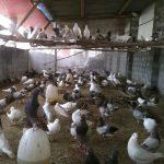 Làm giàu từ nông nghiệp: Mỗi tháng kiếm 30 triệu với Chim