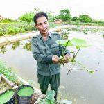 Làm giàu từ nông nghiêp: Thu trên 100 triệu mỗi tháng với Đầm Sen