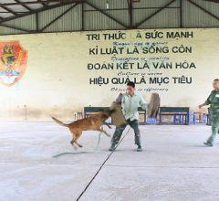 Thu trên 100 triệu 1 tháng, từ ý tưởng dạy Ngoại ngữ cho Chó