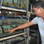 Ý tưởng nuôi cá cảnh kiếm 3 tỷ 1 năm, được Thủ Tướng 2 lần tặng bằng khen