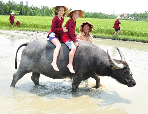Làm giàu ở nông thôn ( Kết hợp du lịch với nuôi Trâu thu tiền nhanh)