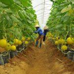 Xu hướng khởi nghiệp trong lĩnh vực nông nghiệp, nhà giàu bước vào khai phá một đại dương xanh mới