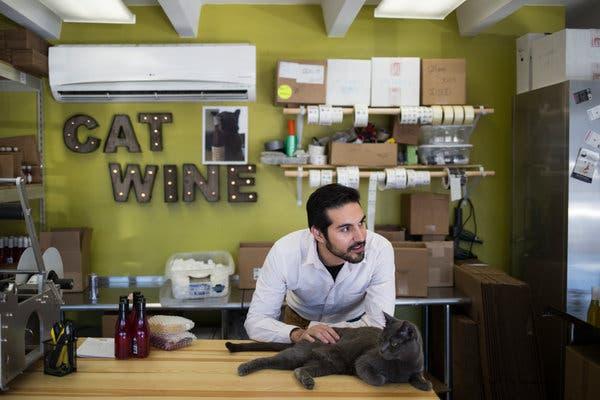 Ý tưởng bán đồ uống cho Chó mèo, thu về 12 tỷ