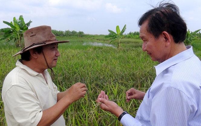 Ý tưởng khởi nghiệp với Gạo hữu cơ ( Đầu tư công phu)