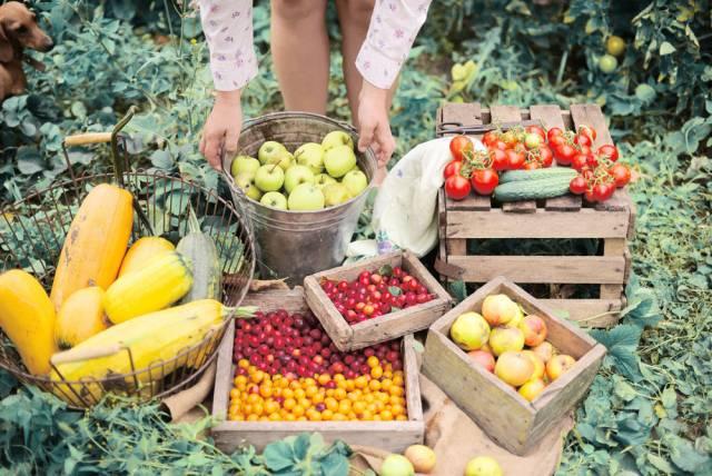 Dữ liệu và cơ hội: Xu hướng kinh doanh thực phẩm hữu cơ đang kiếm tiền như thế nào trên thị trường hiện nay