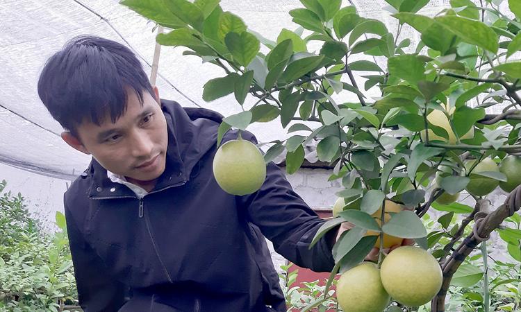 Kế hoạch kiếm tiền trở thành triệu phú với trái Chanh